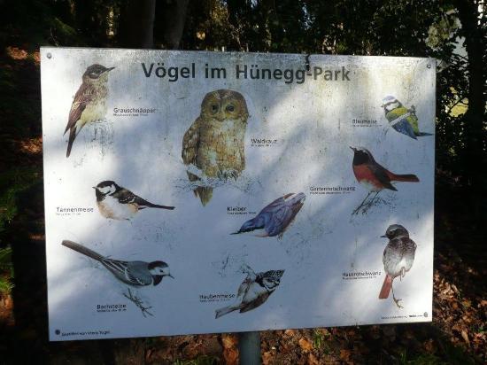 Hilterfingen, Suiza: Vögel im Park