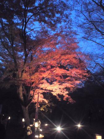 Tsuki no Ishi Momiji Park