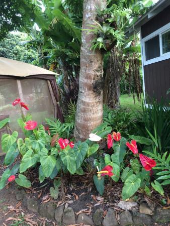 Haiku, Hawaje: Grounds