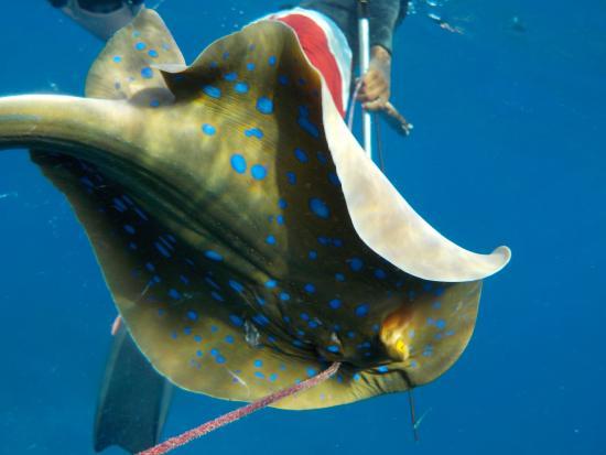 Villa Dida: Pesca subacquea