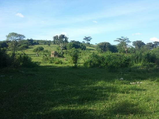 Agip Motel: +50 acres for sale in mbarara  4 km from the main town and 600 meters off the by pass.   For mor