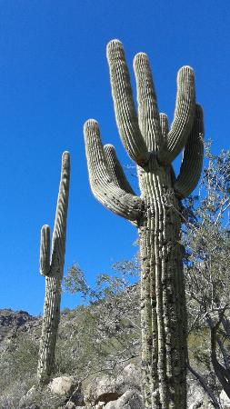 Waddell, AZ: 20151226_131328_large.jpg