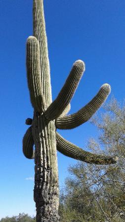 Waddell, AZ: 20151226_140635_large.jpg
