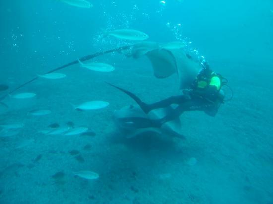 Submarine Safaris : IMG20151227153323_large.jpg