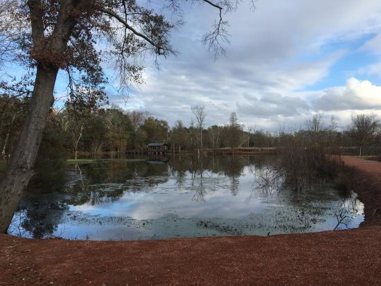 North Augusta, ساوث كارولينا: Pond