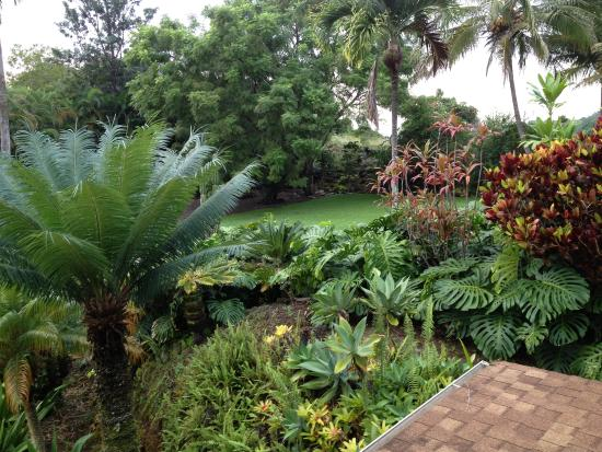 Areca Palms Estate Bed and Breakfast: Front Yard