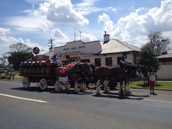 Royal Mail Mulwala: draft horses out front