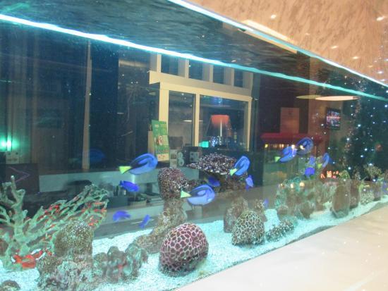 S31 Sukhumvit Hotel: บริเวณล็อบบี้ มีการตกแต่งพื้นที่ด้วย ตู้ปลาทะเล สวย  ครับ
