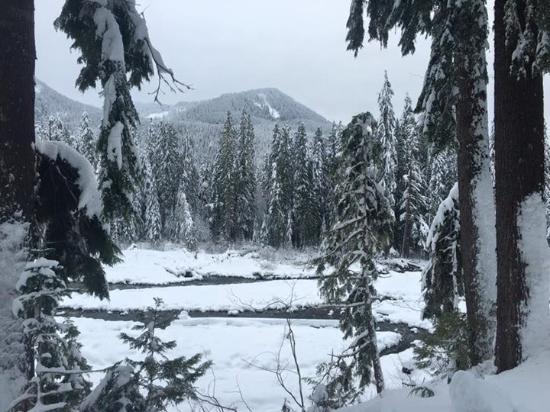 Longmire, วอชิงตัน: Mt. Raineir