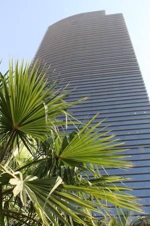 Conrad Dubai: Hotel Conrad Mit Palme