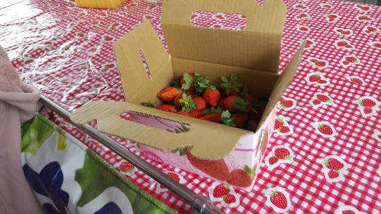 Chun Hsiang Strawberry Farm : 20151215_101331_large.jpg
