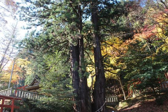 Dokan Inari Shrine