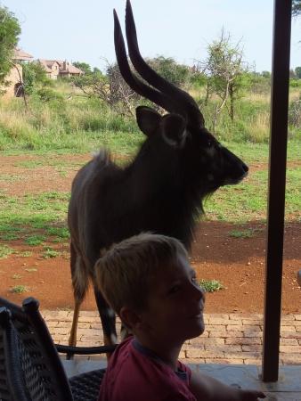 Sondela Nature Reserve Accommodation: Nyala Bull visit