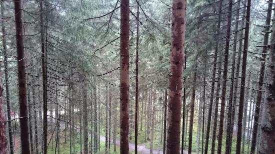 Rohrmoos-Untertal, Österrike: Wilde Wasser