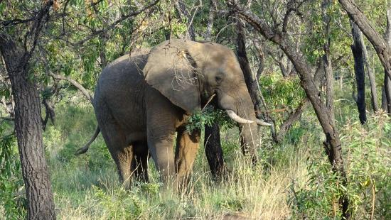 Fifty Seven Waterberg: One of many elephant sightings