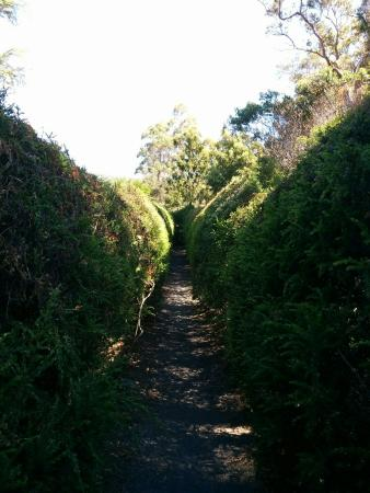 Glengarry Bush Maze