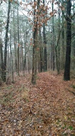 Collinsville, AL: Woods behind the cabin