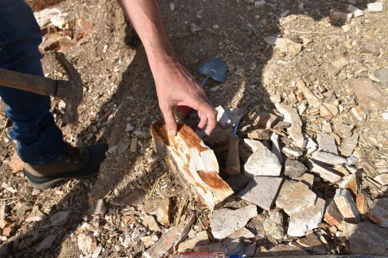 Fossil, Oregon: Escavação.