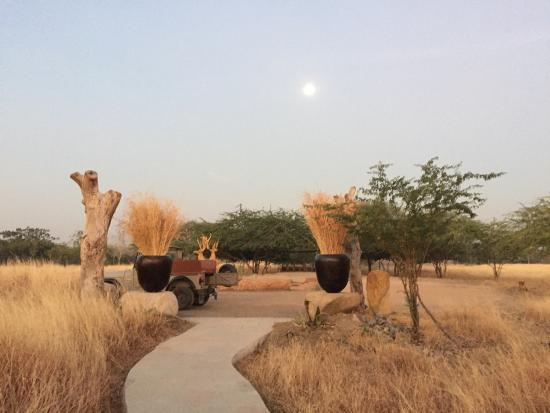 Landscape - The Blackbuck Lodge Photo