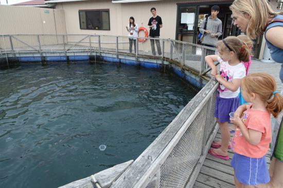 Twizel, Selandia Baru: 小孩子都會被鮭魚吸引