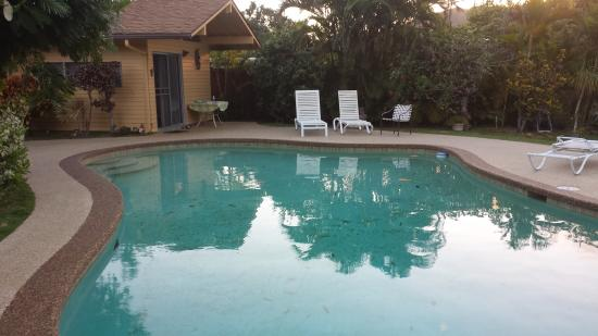 Papaya Paradise Bed and Breakfast: pool