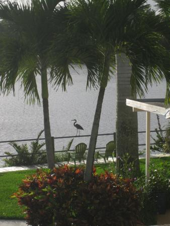 Crane Creek Inn Waterfront Bed and Breakfast: You can watch cormorants, sea hawks, pelicans, egrets and all the others,  all day long