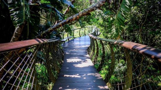 Kirstenbosch National Botanical Garden Tree canopy walk & Tree canopy walk - Picture of Kirstenbosch National Botanical ...