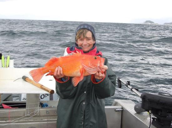 Kingfisher Charters & Lodge: A rare catch, a yelloweye! One per year is allowed! Yummy!!!