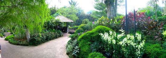 Jalan setapak taman purba picture of singapore botanic for Au jardin singapore botanic gardens