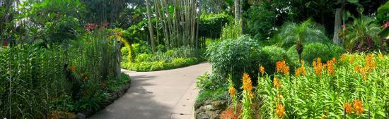 Jalan setapak taman purba picture of singapore botanic for Au jardin les amis singapore botanic gardens