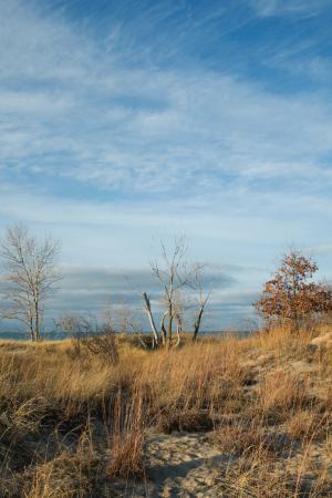 สตีเวนสวิลล์, มิชิแกน: Dunes