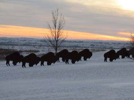 Washburn, Dakota Północna: Bison Sculptures outside Visitor Center