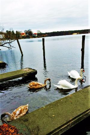 Gruenheide, Tyskland: Peetzsee