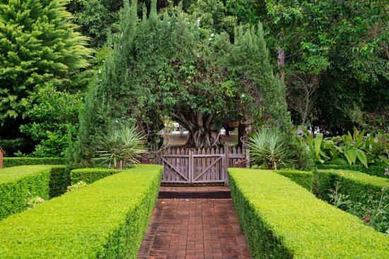 Allumbah Pocket Cottages: Fantastic hedges leading into Allumbah