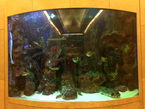 The Beverly Hilton: lobby fishtank