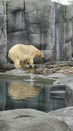 lukkemuskel zoo i Sjælland