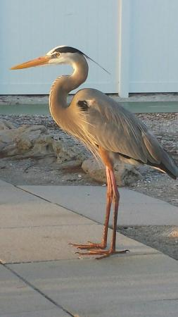 Gulf Tides of Longboat Key: Freddie, Gulf Tides' Beach Chaperone