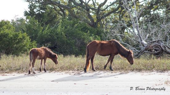 Beaufort, Karolina Północna: Horses along the shore