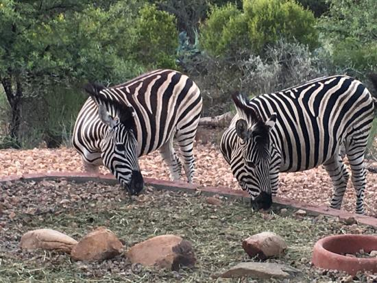 Zwartberg View Mountain Retreat: We ate with the Zebras.