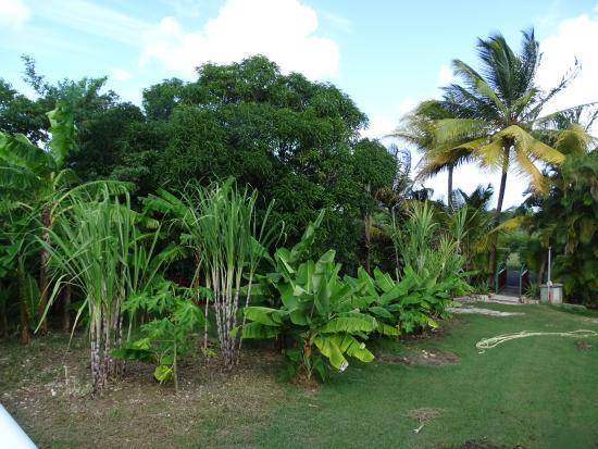 Domaine de Laureal: le jardin