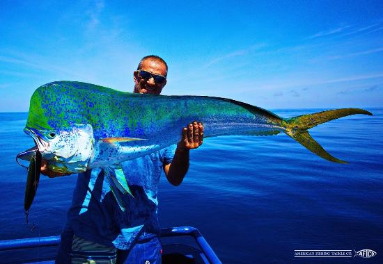 Bull mahi mahi picture of dream on sport fishing playas for Dream about fish
