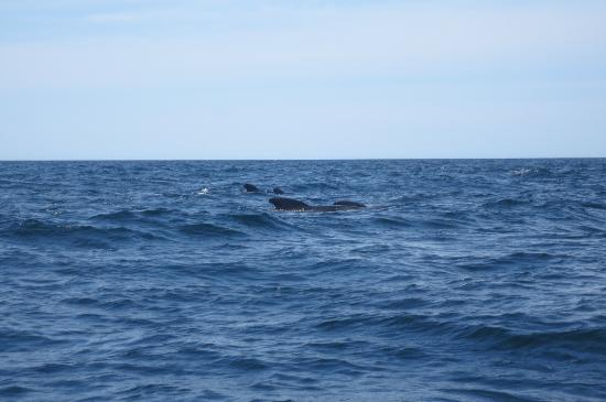 Pleasant Bay, Canadá: Whales