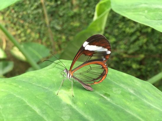 A walk in the park - Photo de Butterfly Park of Benalmadena, Benalmadena - Tr...
