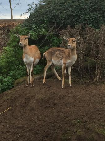 Romaneche-Thorins, فرنسا: Antilope
