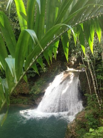 El Sol Vida - Day Tours: Private Blue Hole Fern Gully Adventure Tour