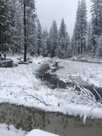 Yosemite Lakes RV Resort: Look Close For Deer