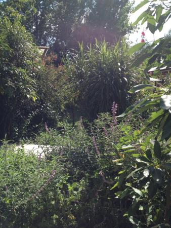 Hostal Vida 2000: Jardin