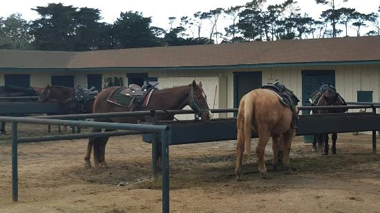 Pebble Beach Equestrian Center 20171228 151404 Large Jpg