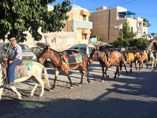 Argonaftes Villa: Hotel and Donkeys