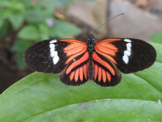 Casa Divina Lodge: Butterflies on the grounds and also the nearby Mariposarium